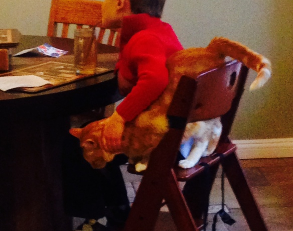 """Yes, this is the worst-quality photo ever. Sorry. It's Martin, taking his bone broth for breakfast, """"assisted"""" by our cat George."""